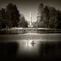 swan and minaret by anjelicek
