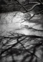 Frozen shadows. by Phototubby