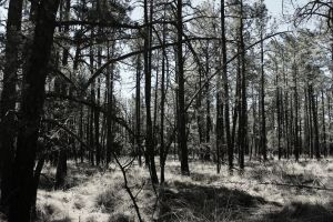 Dry Forest by IsACoolGuy