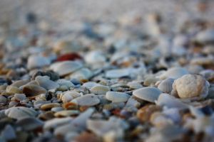 Shells by czphotography
