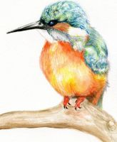 Kingfisher by Myiah