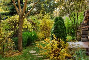 come to my garden - October by Wilithin