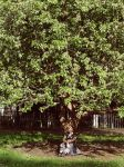 The tree girl by 6igella