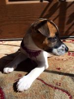 Puppy in The Sun Light by aLameUserName