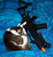 armed cat by BR132Steppenwolf