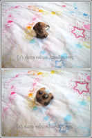 Choc. Chunk Cookie Ring by candysores