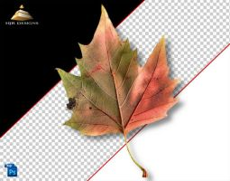 AutumnLeaf 2 by HJR-Designs