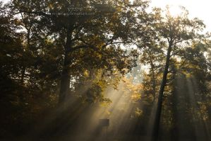 Morning Light rays #1 by reznor666