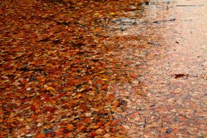 autumn leaves by ilovenatural