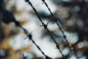 Barbed Wire by dethcap