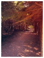 the small path by Lamamilie