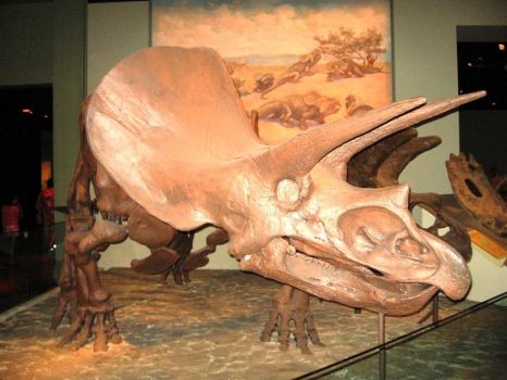 FMNH: Triceratops by geekspace