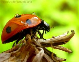 Bugwalk 04 by dandy-cARTastrophe