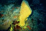 Giant Sponge by diligent-humbleness
