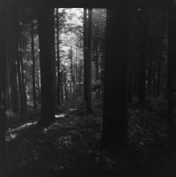 black forest in black and white - 5 by VooDooMania