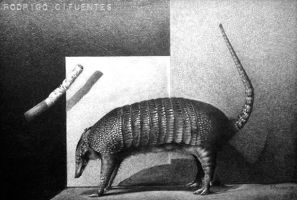 Armadillo by cifuso