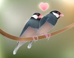 Java finches love by overcover