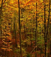 Wonderful Autumn III by Life-For-Sale