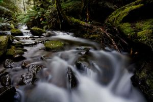 Mt. Field National Park IV by MichaelG85