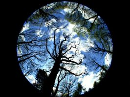 Fisheye Trees by FelicityCharlottex