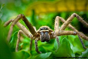 Spider 2 by saka50ft