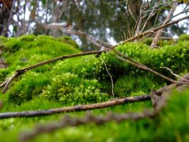 Moss Forest by JFlynngraphics