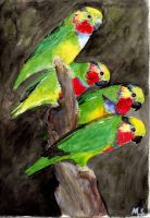 Edward's Fig Parrot by bofink