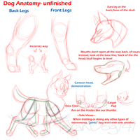 Dog Anatomy- Unfinished by TeXanDog141