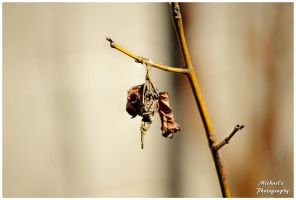 A Bagworm Cocoon by TheMan268