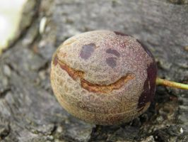 Happy plum by Nydia7