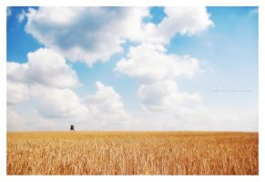 golden field by guality