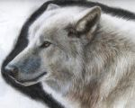 Wolf Portrait by Tofu123
