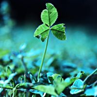 Tattered by incolor16