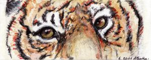 Eye of the tiger by Nanook94