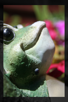 Froggy by rbryant