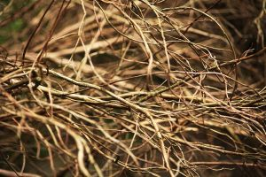 Texture: Twigs by Itti