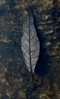 A drowned leaf by ainoani
