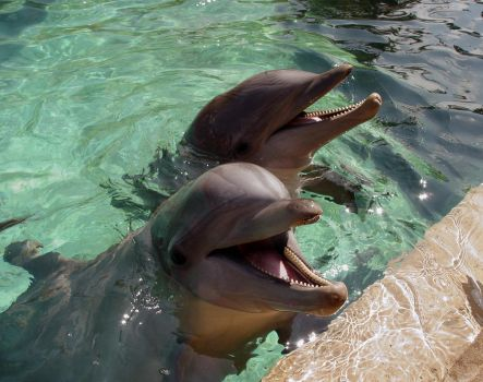 Two dolphins smile in style by shutterbabe2006