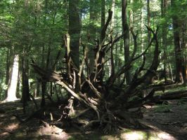 lord of the rings tree by RayneWolfspeaker