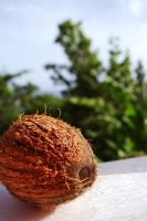 coconut by SublimeBudd