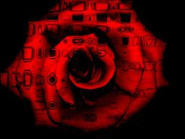 Rose Red by ElrithRydrine