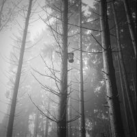 Fog Forest III by DREAMCA7CHER