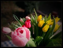 Tulips......spring 5... by gintautegitte69