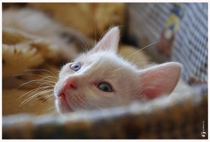 a cat's life 08... by EBENEWOOD