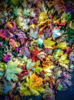 leaves 2 by awjay