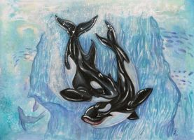 Orca Pair by Eviecats