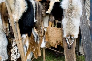 Pelts by tychesecho