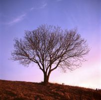 Lonely Tree 5917407 by StockProject1