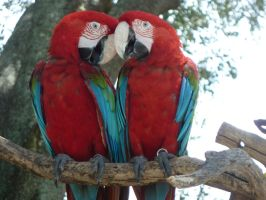 Parrot Love by X-x-Magpie-x-X