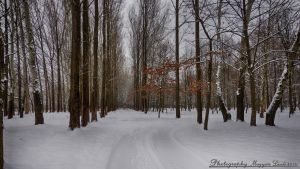 January in Hungary.   HDR. by magyarilaszlo